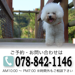 ご予約・お問い合わせは078−842−1146